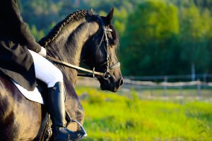 Kids' Horse Jumps | OldDominionJumps.com