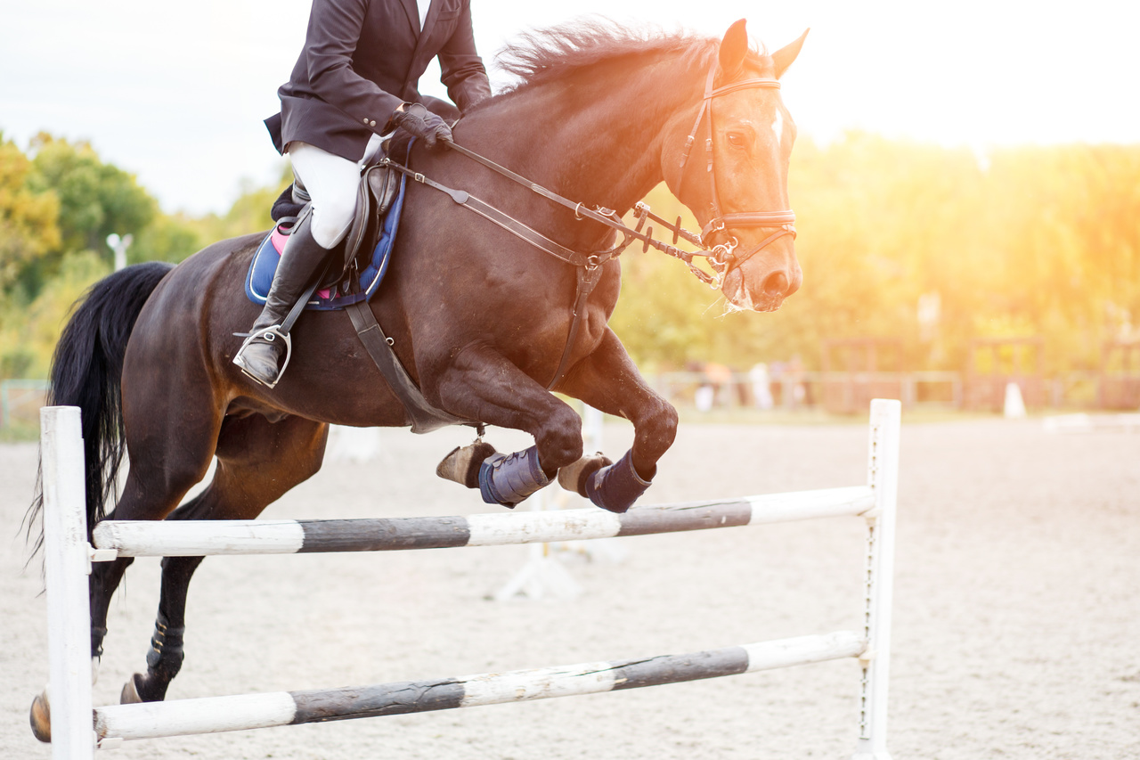 Buy Used Horse Jumps