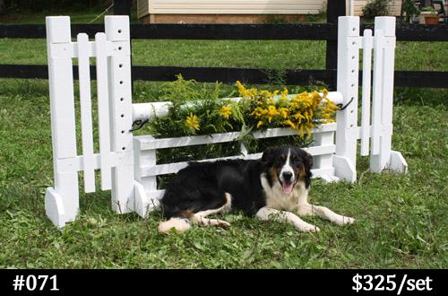 white child-sized horse jump with flower box and dog for size reference